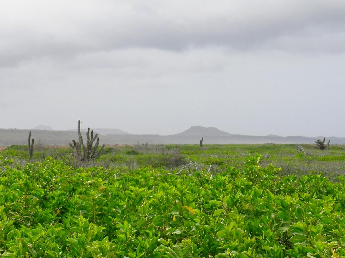 San Pedro Planes Curacao